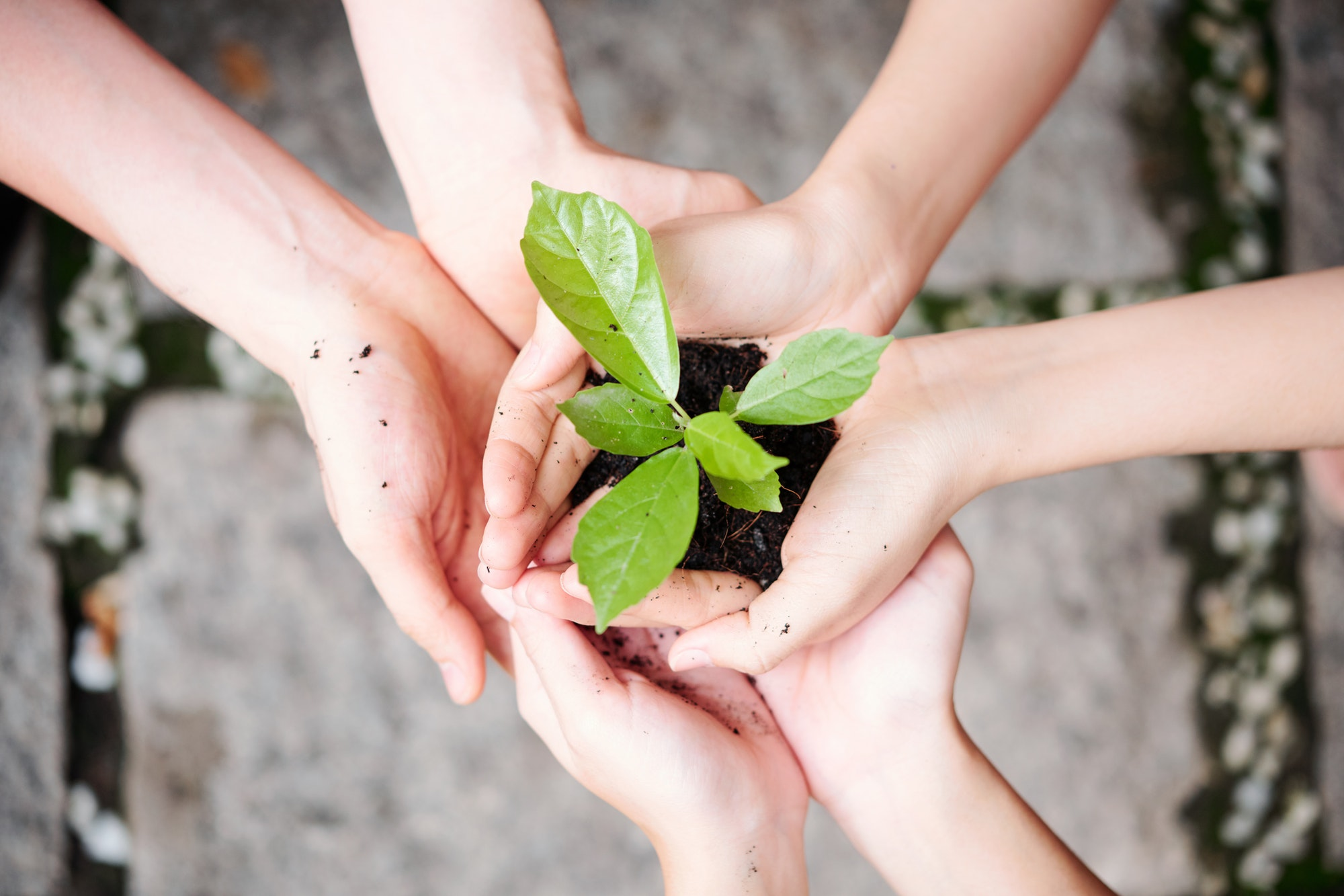 Green plant in people's hands